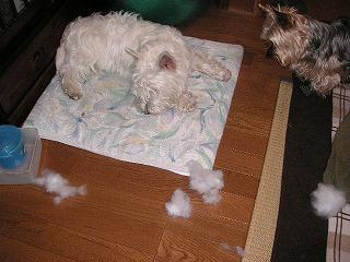 部屋中に綿が散乱