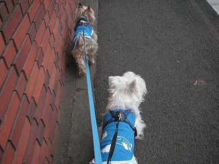 2わんでお散歩