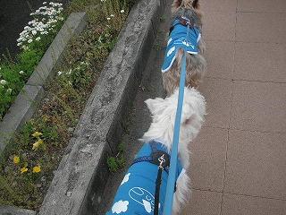 楽しいお散歩