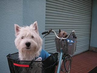 rりゅん初めての自転車