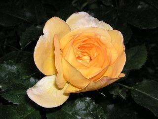 サハラ'98
