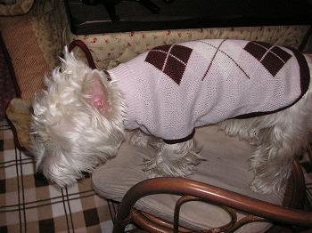 キュートなセーター