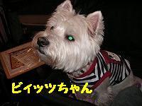ビィッツちゃん