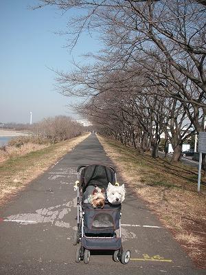 多摩川遊歩道