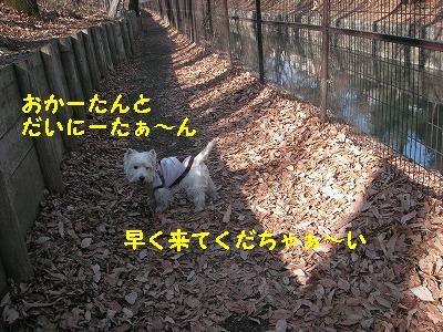お試し散歩