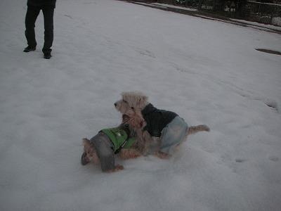 2008.02.04-3