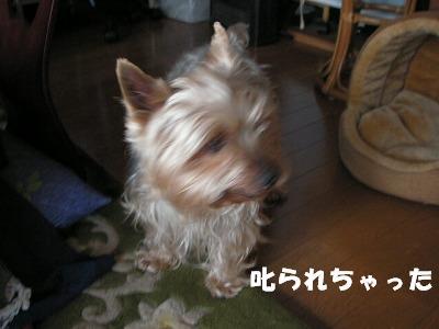 2008.03.10-1