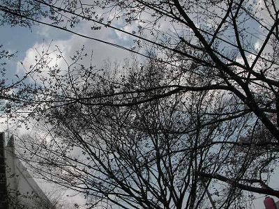 2008.03.26-3