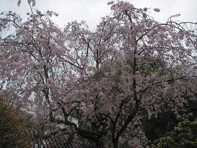 2008.04.20-8