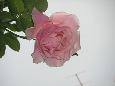 2008.05.07-3