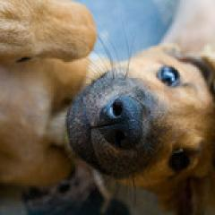 「だい」の犬画像分析結果