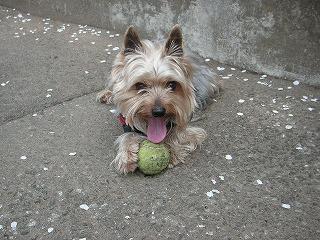 だいボール