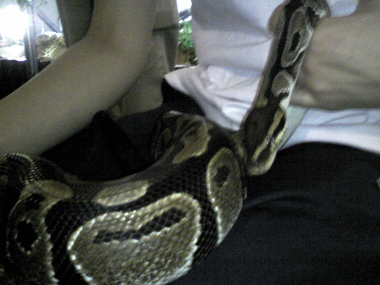 ニシキヘビ!