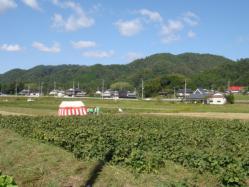 ふみちゃん農園の黒豆枝豆畑です