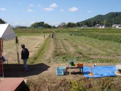 枝豆収穫めっちゃ楽しみました!