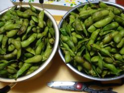 枝豆を洗いました!めっちゃ大量