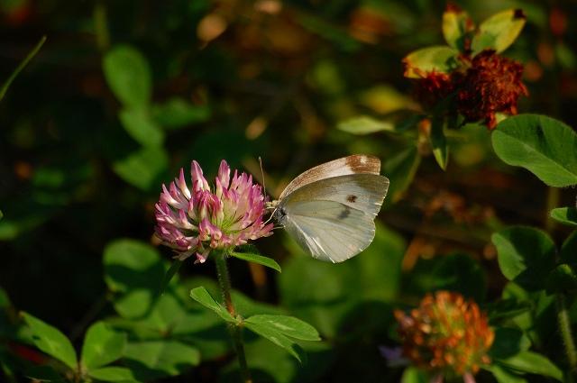 元気な蝶たち♪