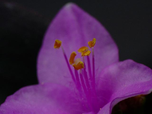 紫御殿、ゴージャスな名前でしょう?