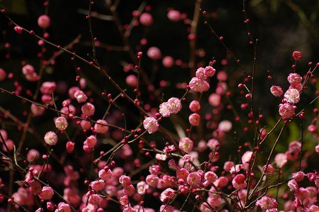 ほんのり梅の香り♪