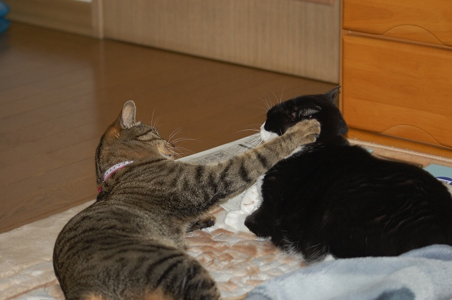 猫パンチ!これこれ・・