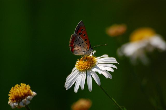 花と蝶!なんだか、どこかで聞いた?