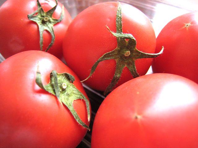 諸木フルーツトマト