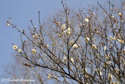 梅が咲いてる公園へ・・・