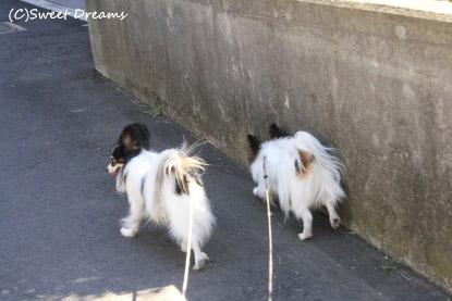 お散歩お散歩嬉しいなー♪