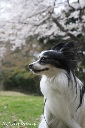 うにょも桜にニヤける(笑)