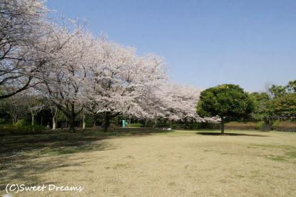 花筵の公園♪