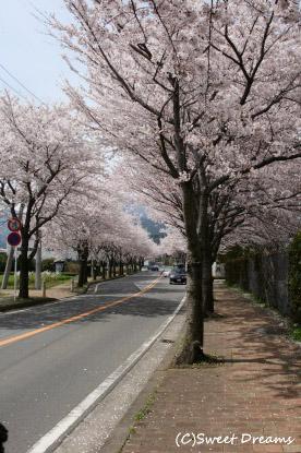 桜並木^m^