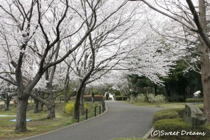 またまた大庭公園へ^m^