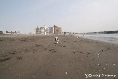 江ノ島に来ました♪