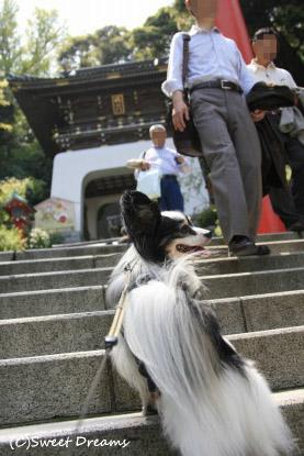 江ノ島神社へ♪