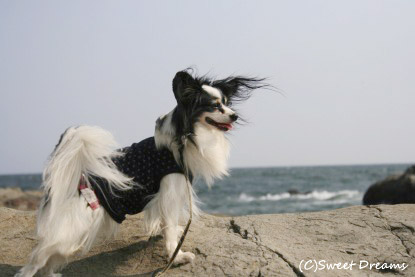海風が気持ちいい~♪