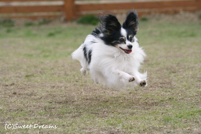 飛行犬^m^