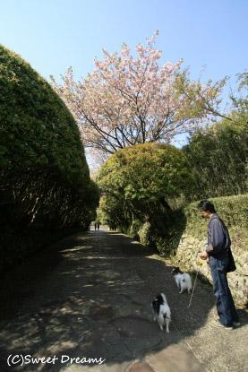 箱根恩賜公園にきました^^