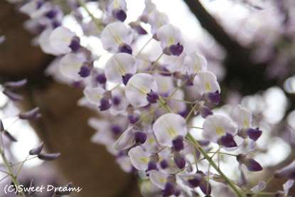 こんなお花ですよ^^