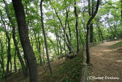 お散歩しながら森林浴♪