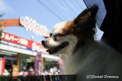 お天気グゥ~(・ω・)b