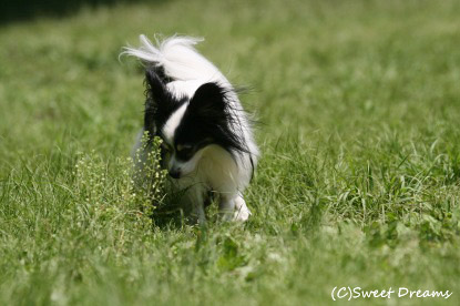 芝生の香り♪