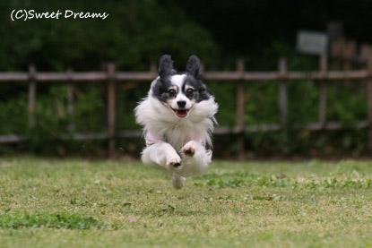 またまた飛行犬♪