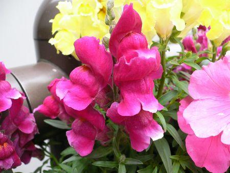 道端の花4