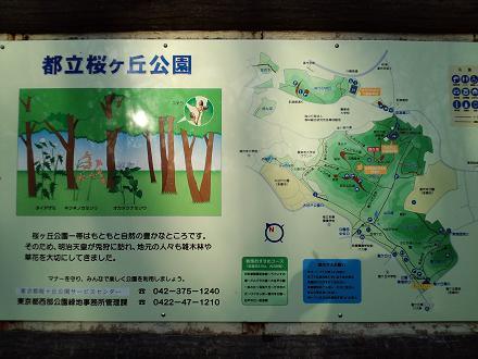 都立桜ヶ丘公園