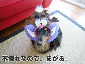 かぶりもの 20090123 01
