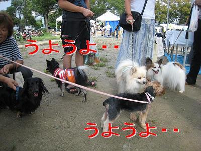 IMG_4235.jpg