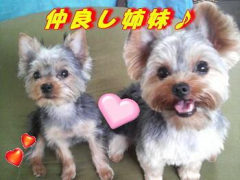 ココナ&ナナコちゃん