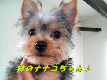 ナナコちゃん3