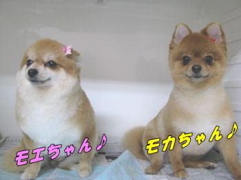 モカちゃん1