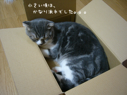 20081121_a
